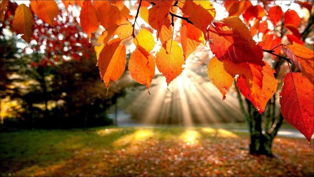 otoño1
